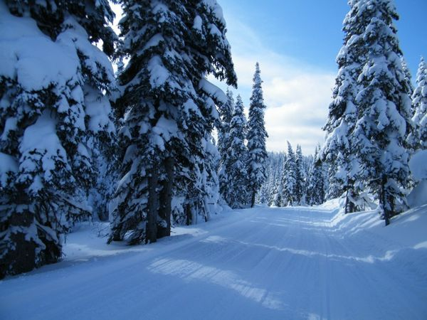 White Wolf Groomed Trails